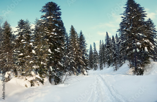 Papiers peints Gris traffic snow drifts in the winter forest
