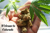 Marijuana Leaf In Hand With Buds With