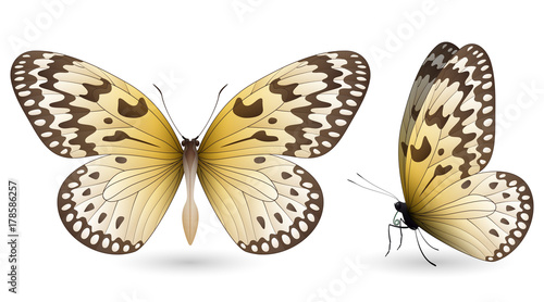 Set of colorful butterflies. Front and side view - 178586257