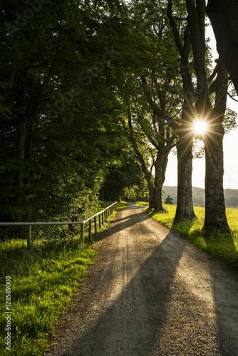 Aluminium Weg in bos Waldweg im Gegenlicht