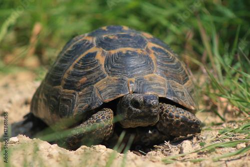 Fotobehang Schildpad Kaplumbağa