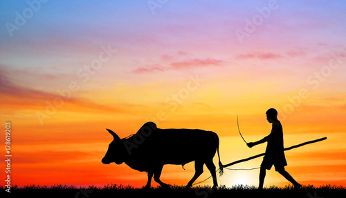 Fotobehang Lichtroze silhouette man with a cow walks on the beach