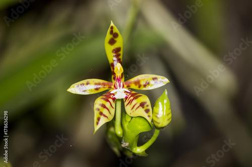 Keuken foto achterwand Vlinders in Grunge orchid flower nature