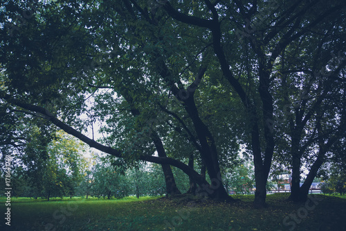 Fotobehang Zwart Green Crooked Trees in the Park Retro