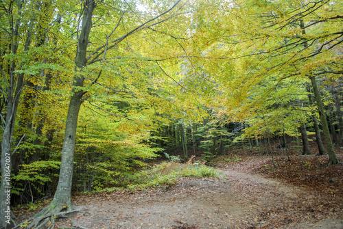 Papiers peints Route dans la forêt Colores de otoño