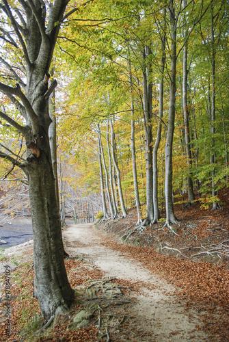 Foto op Plexiglas Weg in bos Colores de otoño