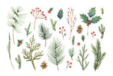 Watercolor vector Christmas set with evergreen coniferous tree branches, berries and leaves. - 178653414
