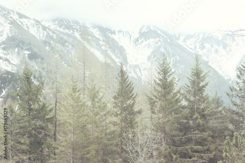 mountain panorama with forest and snowy peaks - 178663029