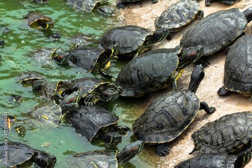 Fotobehang Schildpad Черепахи греются