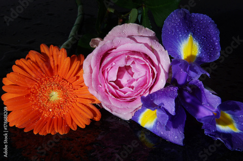 Aluminium Iris Bright flowers - iris, rose and gerbera with drops of water lie on a dark table