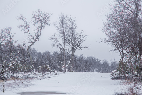 Foto op Canvas Lavendel A beautiful Norwegian landscape in first snow in autumn. White, snowy scenery.