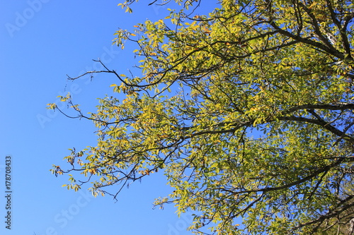 In de dag Bamboo branches against the blue sky in autumn