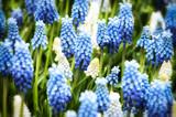 fiori azzurri - 178721681