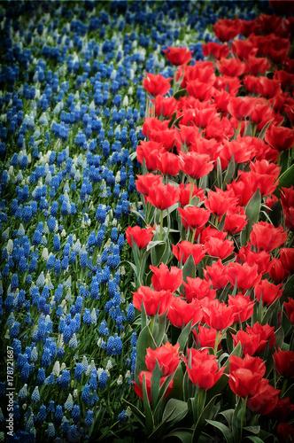 Fotobehang Tulpen tulipani colorati