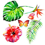 beautiful tropical palm leaves and flowers, watercolor - 178740078