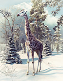 giraffe in the winter forest - 178773429
