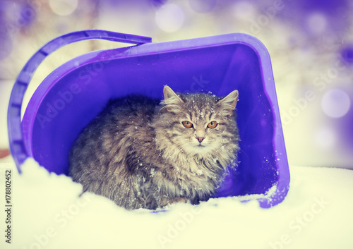 Cat sitting in a basket outdoor in winter in snowfall Poster