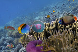Underwater scene, showing different colorful fishes swimming - 178807267