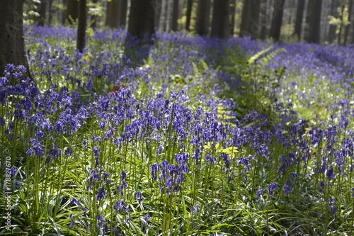 Fotobehang Lavendel photos