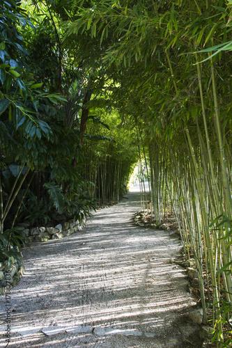 Foto op Plexiglas Weg in bos chemin dans une bambouseraie au domaine Rothschild