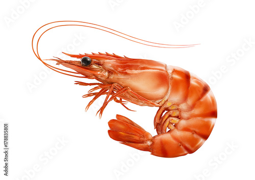 Red cooked prawn or tiger shrimp isolated on white background Poster