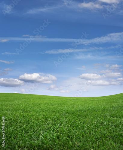 Fotobehang Lente Green grass field and blue sky.