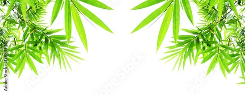 Fototapeta green bamboo leaves isolated on white background
