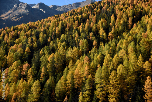 Fotobehang Zwart paesaggio autunnale montagna lago montagne colori alberi foglie vallata Alpi maso baita