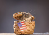 mouse holding an American Flag in mouth - 178869284
