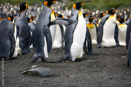 Foto op Canvas Antarctica Penguin with Egg