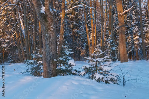 Foto op Plexiglas Cappuccino Winter landscape in the forest at sunset