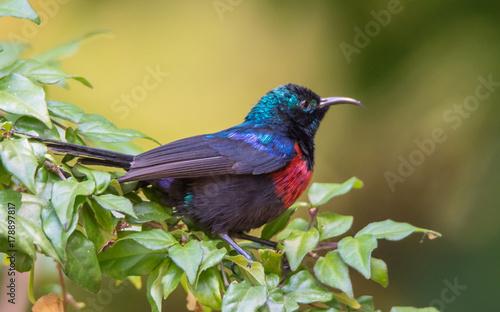 Poster Bird on Branch