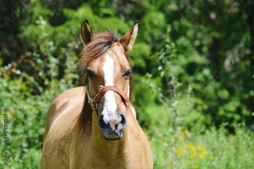 Brown horse on the farm