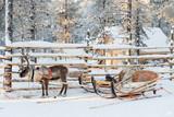 Reindeer sledge, in winter, Lapland, Finland - 178928474