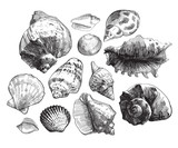 Sea shells sketch set. Black doodle seashell silhouetes isolated on white background. Vector ocean life hand drawn illustration
