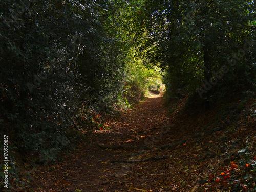 Aluminium Weg in bos Chemin dans la forêt