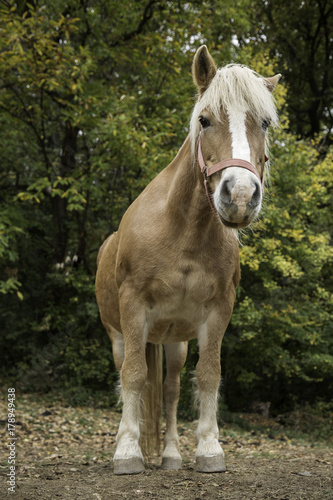 Portrait of beautiful horse Poster