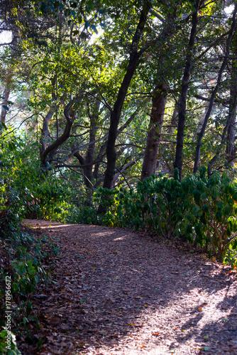 Papiers peints Route dans la forêt natura