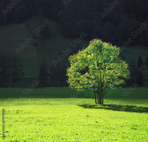 Tuinposter Lime groen tree on mountain field, Lauterbrunnen, Switzerland