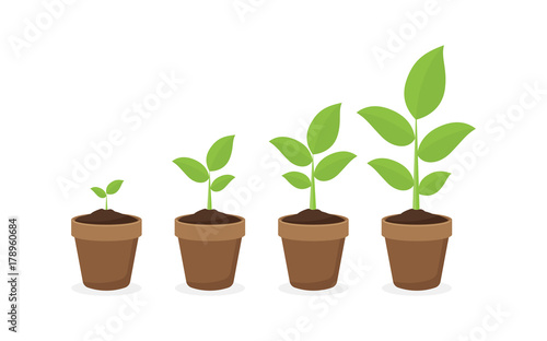 growing plant in process. on white background.