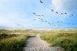 Leinwandbild Motiv Langeoog, Fliegen, Freiheit, Urlaub, Entspannung: Wildgänse an einer Ostseeküste :)