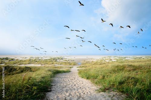 Leinwanddruck Bild Langeoog, Fliegen, Freiheit, Urlaub, Entspannung: Wildgänse an einer Ostseeküste :)