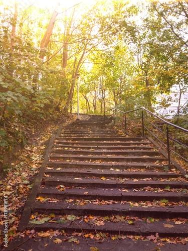Piękny widok na naturę jesienią Poster
