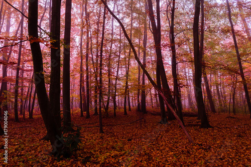 Fotobehang Rood paars October forest