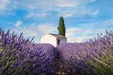 lavender field with chapel