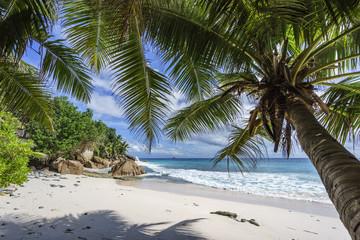 Palm trees on paradise beach at anse patates, la digue, seychelles 2