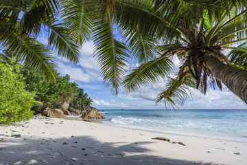Palm trees on paradise beach at anse patates, la digue, seychelles 3