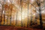 Beautiful forest autumn landscape