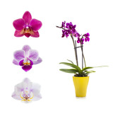 Set of different orchids