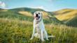 beautiful Labrador dog on green grass
